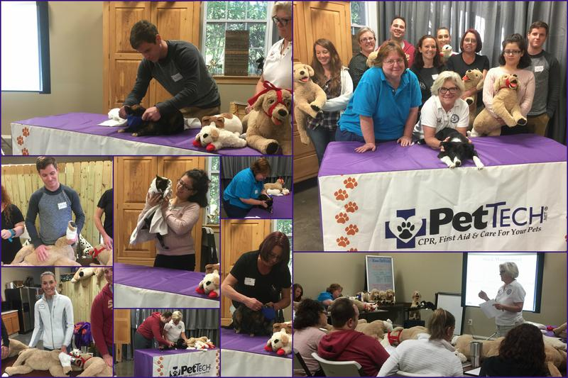 Students learning pet first aid and wellness