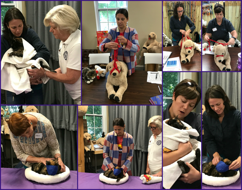 Students learning pet safety in Charlotte NC
